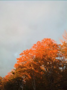 Morning sunlight captured in fall foliage.